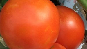 New Research Uncovers Gene That May Be Key To Expanding Tomato Shelflife