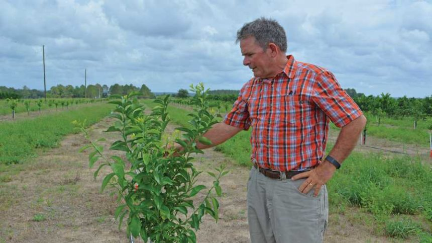 Eco-Conscious Florida Farmers to be Feted for Their Efforts