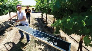 Managing Water In California Vineyards