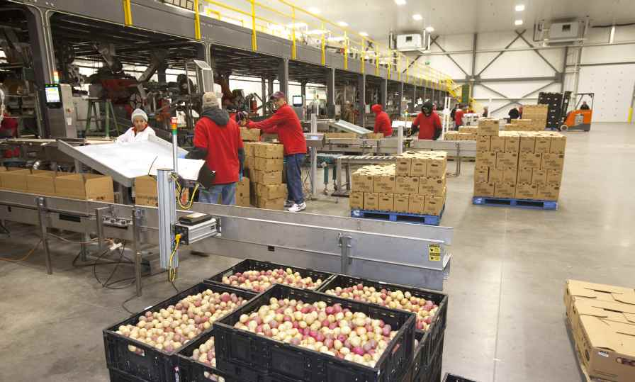 As the farming operation grew, a larger packing facility became necessary. A new state-of-the-art packing facility, located in Arvin, CA, is about four times larger than the one they had been renting. Photo credit: Tasteful Selections