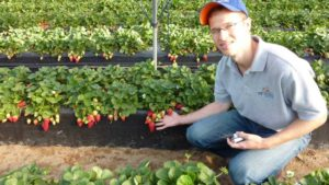 Genetics Key To Keeping Strawberry Growers Out Of The Red?