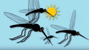 Protect Yourself From The Zika Virus [Opinion]