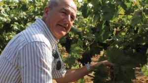 Looking To Italy For New Winegrape Varieties