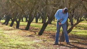Use the Off-Season to Your Orchard's Advantage