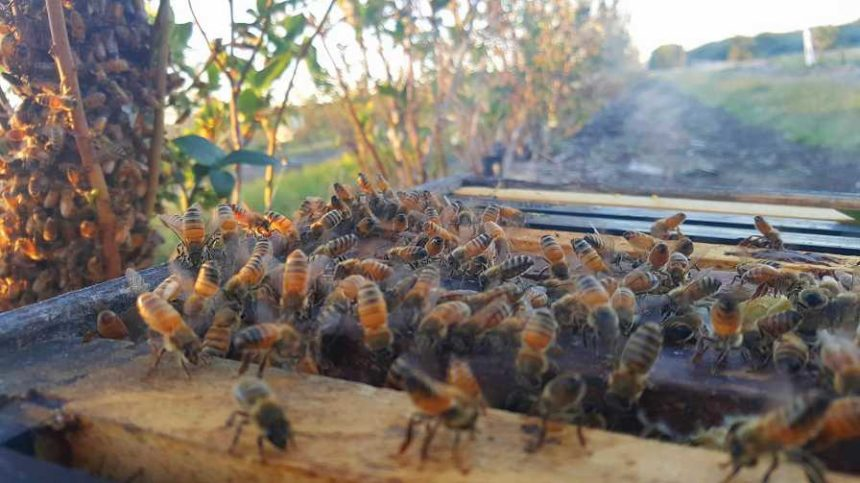 New Mobile App Connects Beekeepers and Farmers