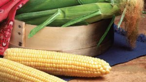 12 Sweet Corn Varieties Florida Growers Can Count On