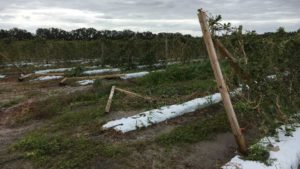 Help On The Way To Florida Farmers Hurting From Hurricane Matthew