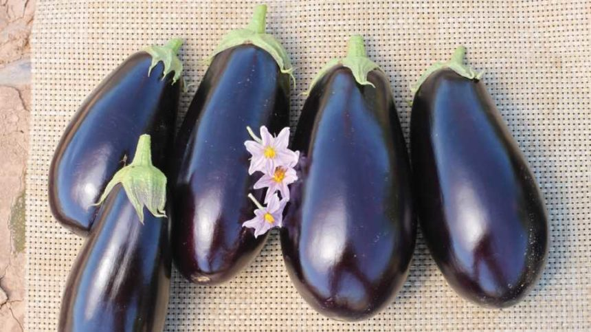 6 New Vegetable Selections Worth Vetting