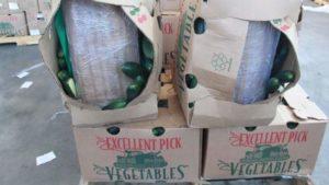 3,100 Pounds Of Marijuana Hidden In Cucumbers Confiscated