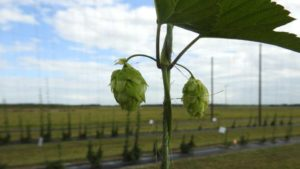 5 Alternative Crops Florida Farmers Should Consider