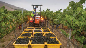 California Winegrape Growers Feeling Crush of Government Shutdown