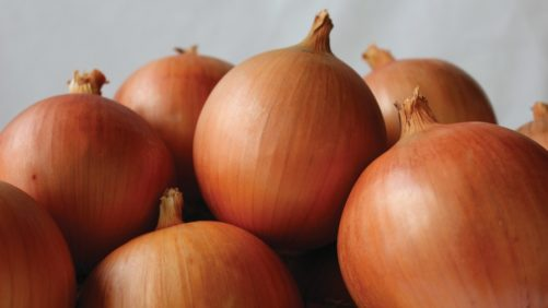 14 Top-Notch Onion Varieties