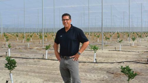 Planting Citrus Under Protective Screen Goes Commercial