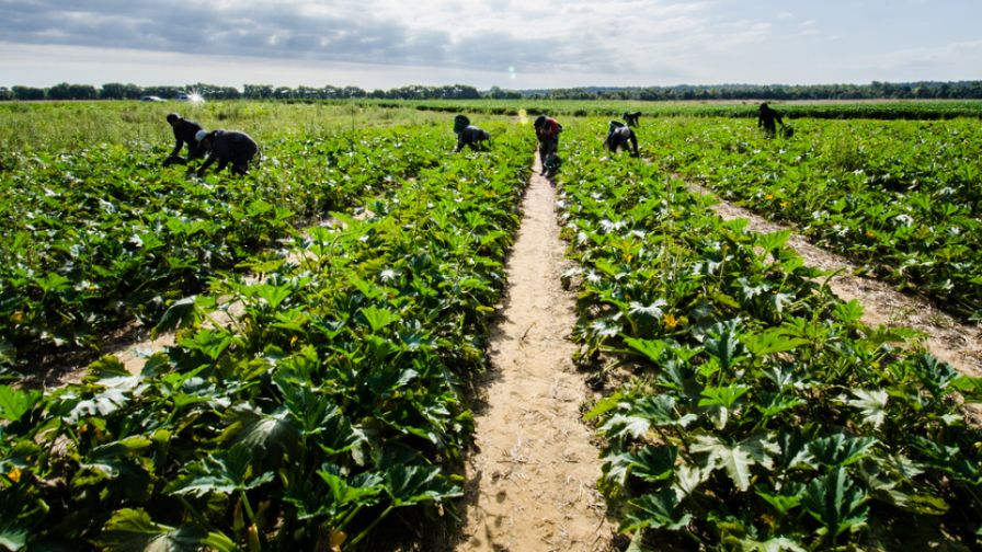 New York Farm Worker Rights Bill Passes