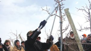 Tips to Prune Smarter, Not Harder in Your Orchard