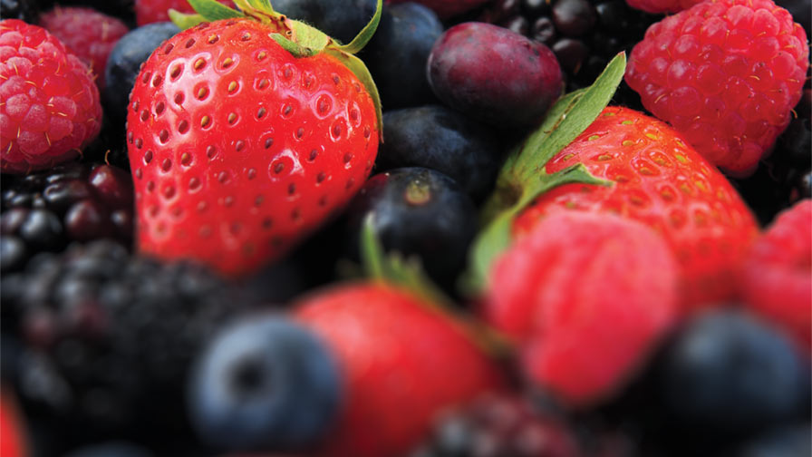 Promising Future for the Berry Industry - Growing Produce