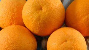 Florida Growers Seeking to Strike Citrus Gold