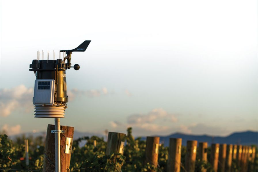 Is the Intelligent Vineyard the Future of Winegrape Growing?
