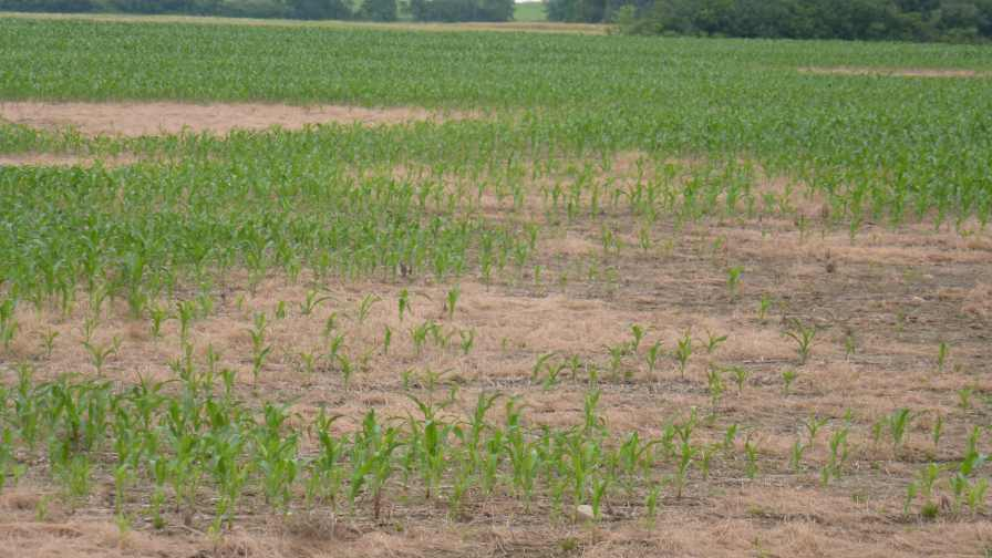 Understand What Your Soil Test Means to Make Better Management Decisions