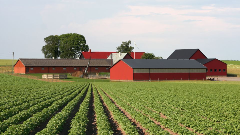 Farms Get Bigger Even As The Number Of Farms Decline Growing Produce