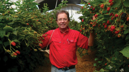 Columnist Wins Prestigious Plant Breeder Award