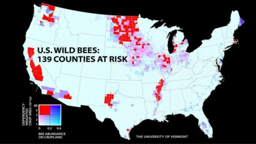 Wild Bee Populations Are out of Sync with Crop Needs
