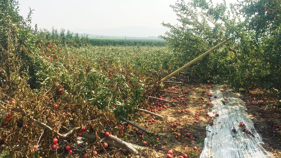 Don't Underestimate the Importance of a Solid Foundation in Your Orchard