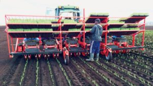 6 Things to Consider When Picking Out a Planter or Transplanter