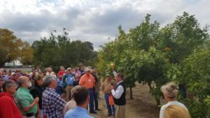 Georgia Citrus Seeking to Make Its Mark