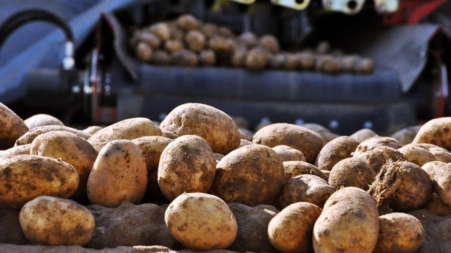 U.S. Trade: Good News for Potato Growers as Retaliatory Tariffs Evaporate, USMCA Passage Nears