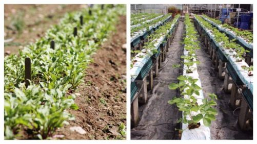 USDA Clarifies Ruling that Allows Non-Soil Organic Production