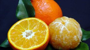 Unique Citrus Variety Standing Up to Deadly Disease