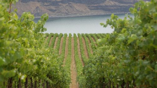 How to Handle Warming Pacific Northwestern Vineyards