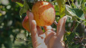 Abundant Robotics Gets $10M Investment for an Apple Harvester