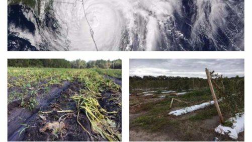 NOAA Betting on Another Busy Atlantic Hurricane Season