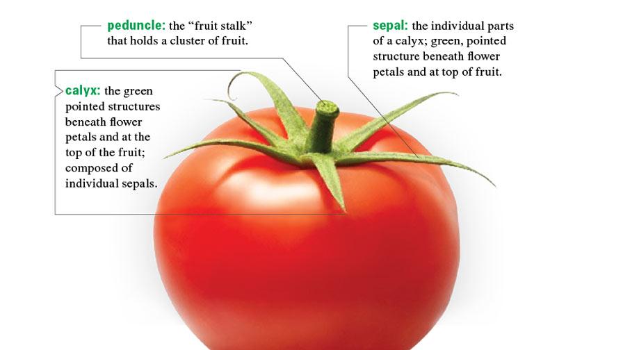 Speak Your Greenhouse Plants' Language - Growing ProduceGrowing Produce