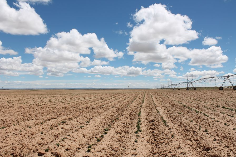 Take a Visual Tour of Navajo Agricultural Products Industry (NAPI)