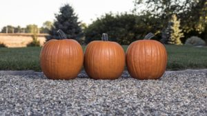 Variety Specs | Production Tips: Pumpkin 'Bayhorse Gold' from Rupp Seeds