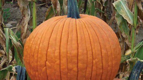 23 Of The Latest Pumpkin Varieties