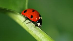 USDA Invests $7.6 Million toward Beneficial Insect Research