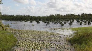 Hurricane Disaster Aid for Florida Farmers One Step Closer