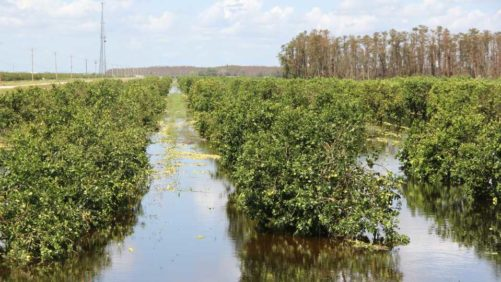 Crop Insurance Reform for Citrus Needed Now