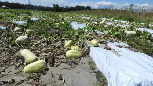 Help Extended to Hurricane-Weary Farmers Dealing With Disaster
