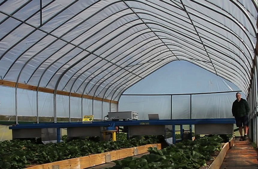 How UV-C Irradiation Can Help Save Strawberries