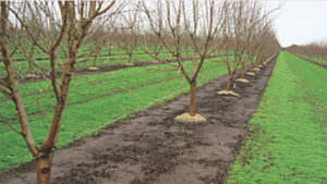 Achieve Season-Long Tree Nut Protection