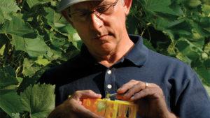 Program Uses Genetics to Bolster Grape Breeding