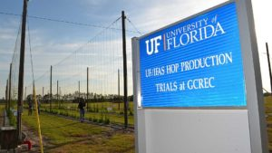 Research on Florida Hops Forced to Dig Deeper