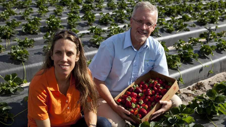 Natalia Peres and Clyde Fraisse talk Strawberry Advisory System