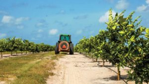 Florida Citrus Mutual Shifts into High Gear
