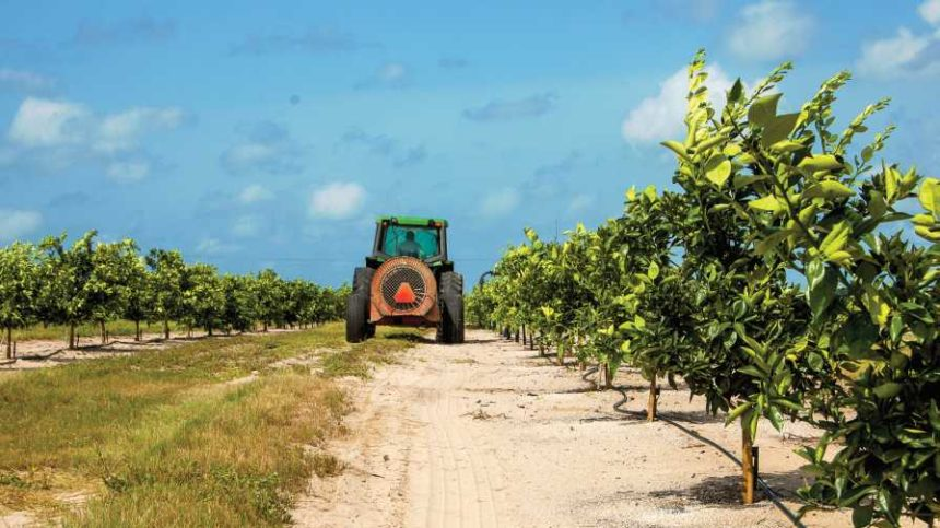 Strong Pulse Found in Latest Florida Citrus Survey Results
